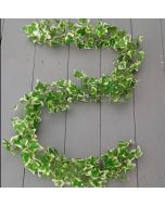 Artificial 170cm Variegated Green Ivy Chain Garland