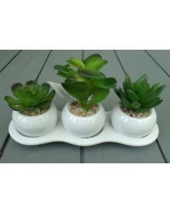 3 Artificial Succulents