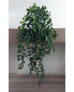 Artificial Trailing Crassula Plant