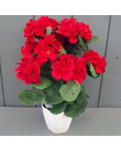 Potted Red Geraniums