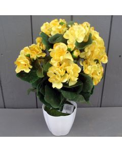 Yellow Geraniums