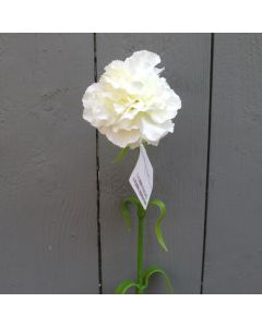 Artificial Single Ivory Carnation