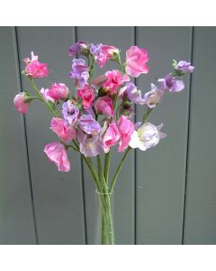 Artificial 42cm Light Pink and Lilac Sweet Pea Flowers Bunch