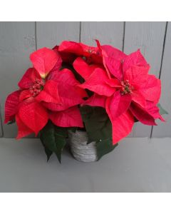 Artificial 28cm Red Poinsettias in a Grey Pot