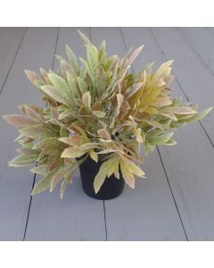 Artificial 27cm Sage Potted Plant
